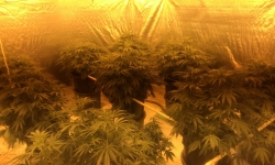Public information helps police locate Gungahlin grow house.