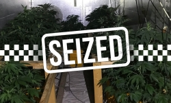 Warrant activity reveals grow house in Holt