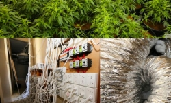 ACT Policing has seized a further 71 cannabis plants and over $20,000 worth of hydroponic equipment as part of Operation Armscote