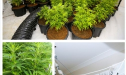 ACT Policing has seized a further 89 Cannabis plants and more than $20000 in hydroponic equipment from a house in Bonner