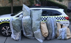 Reminder for Canberrans as man cautioned for cannabis cultivation.
